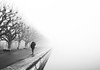 (Magdalena Roeseler) Tags: fog foggy blackandwhite bw sw monochrome street strassenfotografie streetphotography streettog autum winter olympus candid zug zugersee