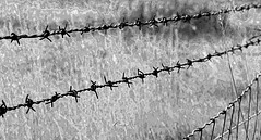 Broken Heart (Kris_wl) Tags: sad hurt monochrome abstract barrier heart broken white black blackwhite fence wire barbed barbedwire pain