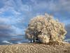Blick auf den Gupfen (afw | ph[o]to) Tags: hdr gupfen deutschland verschiedenes winter sonne germany frost schwarzwald eis blackforest badenwürttemberg weilheim de