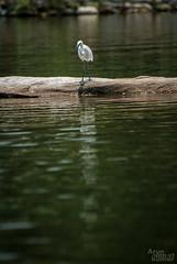 Its a world inside. (V.T.Arun ram kumar) Tags: lake green bird water bangalore sanctuary ranganathittu