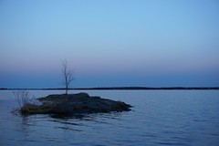 Tree on Rocks at Dusk (aforgrave) Tags: blue tree silhouette bay dusk outcropping epz1650mmf3556oss sonya6000