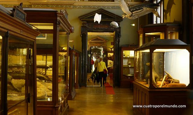 Kilometros de pasillos repletos de vitrinas y exposiciones