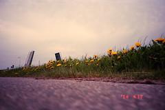 Drawbridge and Flowers (Ricoh R1, DM Paradies 400) (baumbaTz) Tags: bridge flowers flower film analog germany deutschland open iso400 atl low perspective blumen ishootfilm 400 april epson drawbridge r1 analogue blume brücke dm ricoh analogphotography stade 2200 lowperspective klappbrücke 2014 niedersachsen lowersaxony paradies löwenzahn c41 filmphotography jobo fpp offen ilovefilm v500 ricohr1 filmisnotdead autolab vuescan tetenal analoguephotography lowviewpoint bodennah istillshootfilm filmforever epsonv500 dmparadies400 tetenalcolortecc41kit 201404 filmphotographyproject colotec believeinfilm atl2200 joboautolabatl2200