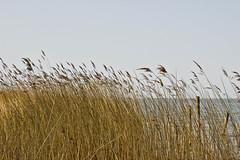 Dechowshof (ax.bach) Tags: architecture landscape europa surf ostern landschaft ostsee chill sup dechowshof