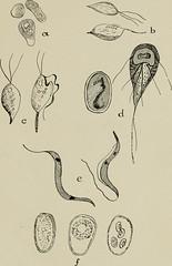 Anglų lietuvių žodynas. Žodis class flagellata reiškia klasės flagellata lietuviškai.