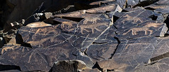 animal petroglyphs (Tamgaly - Kazakhstan) 6