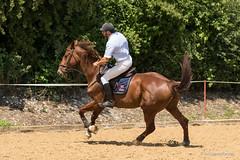 DSC08003_s (AndiP66) Tags: horse macro sports sport schweiz switzerland sony august sp di if alpha tamron concours pferd equestrian f28 canton solothurn ld horsejumping 70200mm wettbewerb 2014 springen 1august kanton springreiten subingen andreaspeters pferdespringen 77m2 wasseramt a77ii ilca77m2 77ii 77markii slta77ii 1augustspringen