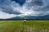 வெண்மேகங்களை சுமந்தபடி (ayashok photography) Tags: india man green rain asian nikon asia village rainyday rice indian working desi monsoon agriculture bharat paddyfield tenkasi westernghats bharath desh barat 2014 cwc barath thenkasi incredibleindia nikkor24120mmvr nikonstunninggallery ricecrop ayashok nikond700 chennaiweekendclickers ayashokphotography