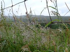 Skye fence 2 (Bob at Blashford) Tags: skye fence scotland isleofskye waterdroplets hff fencedfirday