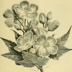 Anglų lietuvių žodynas. Žodis solanum crispum reiškia <li>Solanum crispum</li> lietuviškai.