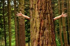 Eco-friendly (marinadelcastell) Tags: green ecology forest hug bosque ecología wald abrazo bois bosco ecofriendly bosc umarmung ecologia environmentallyfriendly écologie étreinte abraçada ökologie ecosostenibilità naturefriendly abbracio