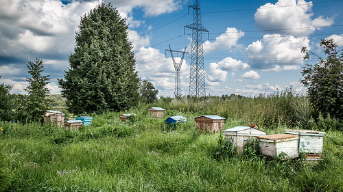 High-Voltage Apiary