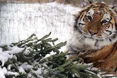 2014-01-29 Snow Aria (140)