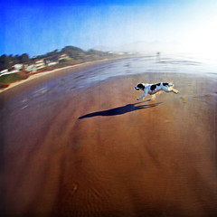 hurry as fast as you can (1crzqbn) Tags: dog sunlight motion blur color beach nature wet female reflections square shadows textures 7d panning 10mmfisheye 1crzqbn hurryasfastasyoucan