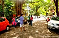 A Walk To Remember (A_Sarkar) Tags: road street trees light sun sunlight india colour cars colors nikon shadows bricks lane bombay mumbai avenue d7000