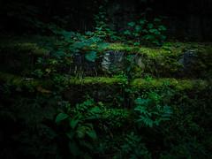 DSCF3333.jpg (DickerDackel) Tags: germany natur wald badenwurttemberg djungel schwäbischealb seeburg badurach albtrauf ermsursprung