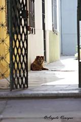 Guardian (Angela Paz) Tags: dog cute dogs canon perro explore perros guardian callejero doglover explored