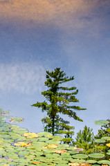 Reflection (Killarney Provincial Park) (Fryderyk Supinski) Tags: lake ontario reflection tree art nature water clouds outdoors pond hiking surreal canadian hike dreaming illusion lilypads treebranches killarneyprovincialpark laclochesilhouettetrail d7000