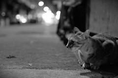 2014-08-20_11-22-05 () Tags: cat neko