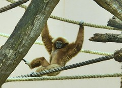 Image33 - Copia (Daniel.N.Jr) Tags: animal selvagem zoologico kodakz990