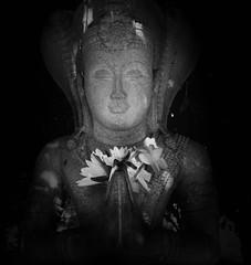 Maniakkhitha Naga Raja