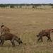 African safari, Aug 2014 - 055