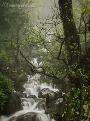 Paradise (N@r@y@n@) Tags: goa dharwad dudhsagarwaterfalls