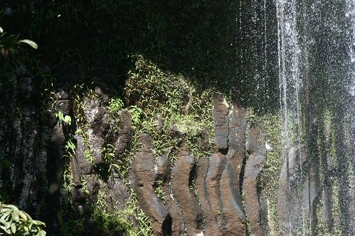 Millaa Millaa Falls (17)