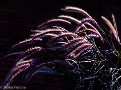 willows.toronto.september.2014.jpg