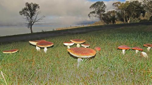 2155 Mushroom