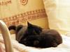 grooming (matsugoro) Tags: olympus digital pen epl2 zuiko 50mm myroom pet animal cat pair grooming