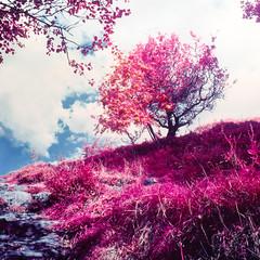 Orrest Tree (Kenneth Ipcress) Tags: windermere kennyip aerochrome infraredfilm exakta66 mir26b