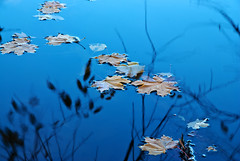 Floating (Nikon Guy 56) Tags: leaves water nature peterslake nikon d60 autumn