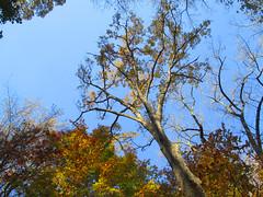 IMG_8803_RCP_Autumn_Trees (Stephenie DeKouadio) Tags: canon photography outdoor rockcreekpark washington washingtondc dc dcphotos nature autumn beauty