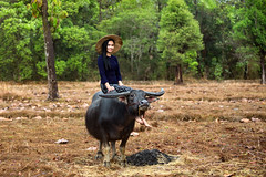 Farmer with Buffalo (Sutipond Somnam) Tags: farmer woman handsome attractive green collect leaf crop apron vegetable basket tomato 20s turnip greenhouse leek joyful gardener nature job harvest food animal pet vietnam laos southeastasia cambodia myanmar together buffalo countryside happiness