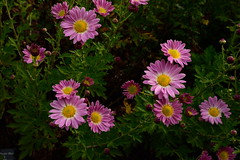 JJN_3084 (James J. Novotny) Tags: chicago conservatory botanical gardens garden flowers flower nikon d750 path paths skokie lagoons