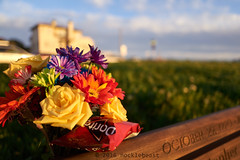 doritos (nocklebeast) Tags: bethanycurve westcliff nrd bouquet doritos flower flowers santacruz ca usa doritosl2070122 scphoto
