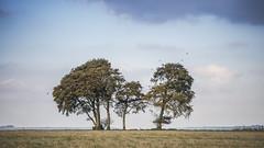 Autumnal Clump (stevedewey2000) Tags: salisburyplain wiltshire sptacentre spta sptaeast landscape tree treescape charltonclumps copse stand m42 wallaceheaton 135mm 169 explore explored