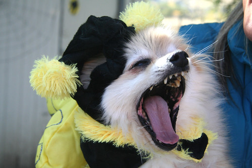 Photo - Howl-o-ween 2015 - 081
