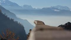la barrière (bulbocode909) Tags: valais suisse isérables barrières bois automne nature montagnes brume stratus arbres forêts orange bleu