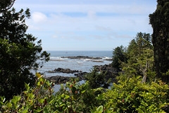 Views from Ucluelet's Wild Pacific Trail Lighthouse loop section, Vancouver Island, BC (Jim 03) Tags: wild pacific trail twisted trunks roots ferns moss temperate coastal rainforest ucluth peninsula lighthouse loop barkley sound amphitrite jim03 jimhoffman jhoffman jim wwwjimahoffmancom wwwflickrcomphotosjhoffman2013