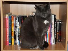 Sleepy Niilo-cat (irio.jyske) Tags: cat bookshelf books sleepy niilo nice canon sigma