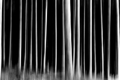 Abstrait (Bruno MATHIOT) Tags: forest fort arbre tree move zoom motion fil pose nature outdoor extrieur randonne hiking 55250mm eos canon nb bw noiretblanc 760d
