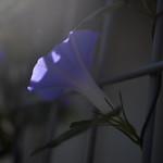 Light thumbnail
