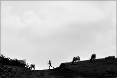 || O' Lost || (VisualsDiary) Tags: boy nature village herd controls landscape banswara singarpur world smiles he has canon harshshahphotography