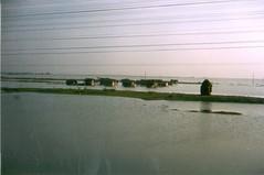 198201.254.indien.fahrt.rameswaram (sunmaya1) Tags: india tamilnadu rameswaram