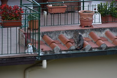 One caged, one free (gioelegaggio) Tags: animals animali gatto cat cats dogs cani peluche florence firenze toscana tuscany italia italy amazing moment snap cane