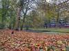 Suburban Autumn (sander_sloots) Tags: holy vlaardingen lepelaarsingel flatgebouw singel sloot canal suburb autumn leaves herfst herfstbladeren kleuren galerijflat apartment block trees bomen platanen