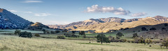 California Landscape (Rick Derevan) Tags: mountains oaks oaktree valley light nature ngc dailyrayofhope2016 droh daily ray hope landscape