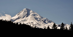 Mount Hood, Oregon with sihlouette foreground (maytag97) Tags: hoodriverarea maytag97 oregon mounthood terrain rugged snow glacier wilderness forest silhouette cascade